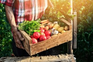 Old man holding wooden crate filled with fresh vegetables - tomatoes, carrots, garlic and potatoes.